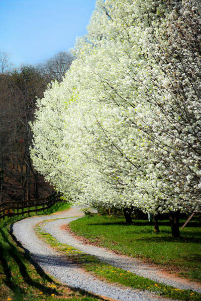 Photograph - Springtime Path by Emanuel Tanjala