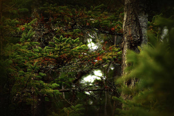 Photograph - Spruce With A Touch Of Red by Scott Hovind