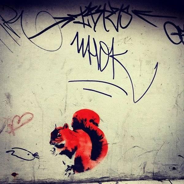 Handmade Wall Art - Photograph - Squirrel Art??? by Antony Crafford