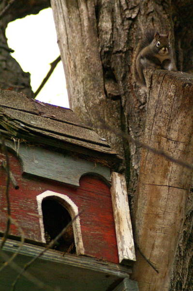 Wall Art - Photograph - Squirrel At Home by Ben Upham III