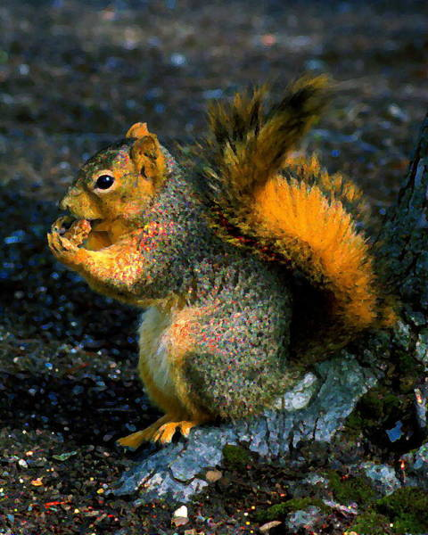 Photograph - Squirrel At Riverfront Park by Ben Upham III