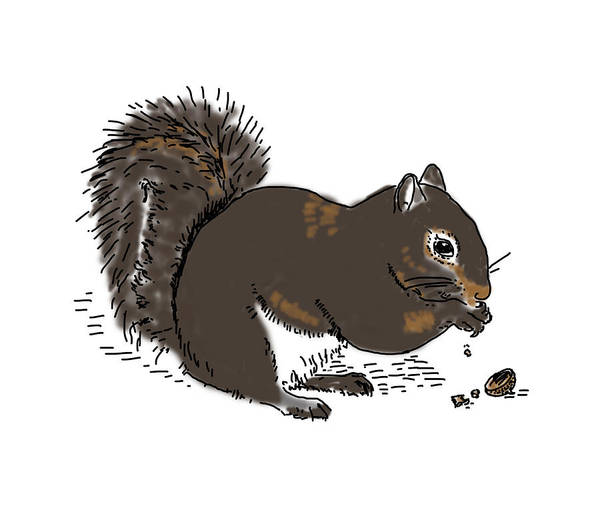 Drawing - Squirrel Eating by Daniel Reed