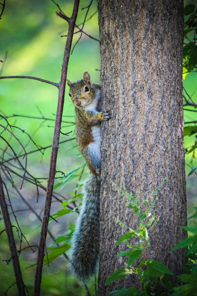 Christy Photograph - Squirrel In The Park by Christy Patino