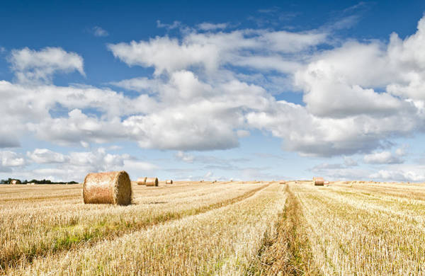 Fern Frost Photograph - St Andrews' Bales by Chris Frost