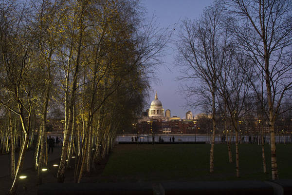 Photograph - St Paul's With Silver Birches by Gary Eason