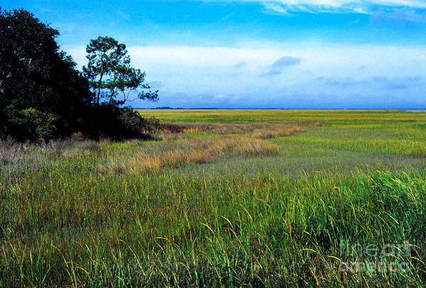 Photograph - St Simons Island Coastal Prairie by Thomas R Fletcher