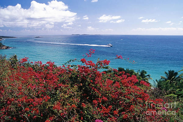 Wall Art - Photograph - St Thomas Coastal Panorama by George Oze