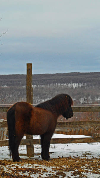 Photograph - Stable With A View by Cyryn Fyrcyd