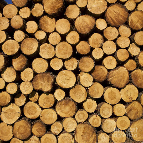 Filling Photograph - Stack Of Wood Logs. by Bernard Jaubert