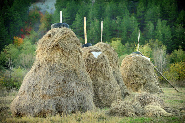 Horizontal Landscape Photograph - Stacked Hay by Gunay Mutlu