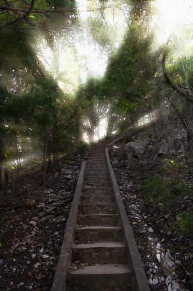 Tree Climbing Photograph - Stairway To Heaven by Ricky Barnard