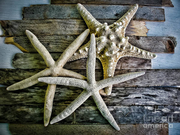 Ocean Life Photograph - Starfish by Colleen Kammerer