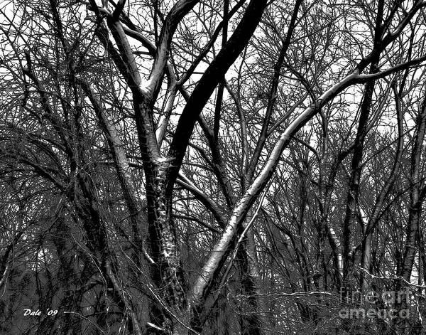 Digital Art - Stark Winter by Dale   Ford