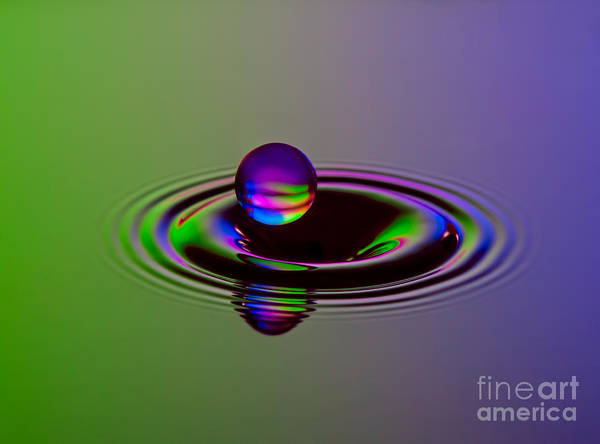 Photograph - Staying Afloat by Susan Candelario