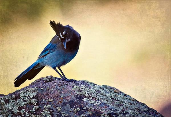 Wildbird Photograph - Stellers Rock by Lana Trussell