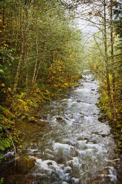 Photograph - Still Creek by Wes and Dotty Weber