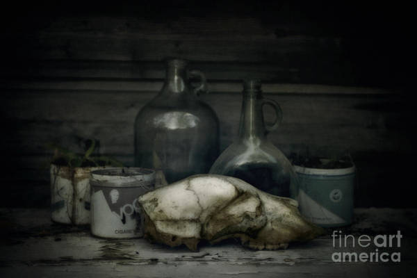 Pitcher Plant Photograph - Still Life With Bear Skull by Priska Wettstein