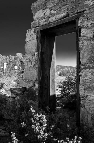 Photograph - Still Standing by Colleen Coccia