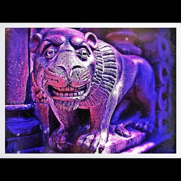 Wall Art - Photograph - Stone Lion by Leonard Lee