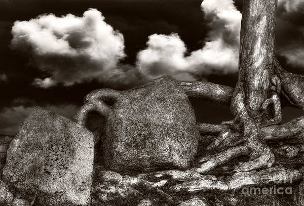 Stones And Roots Art Print
