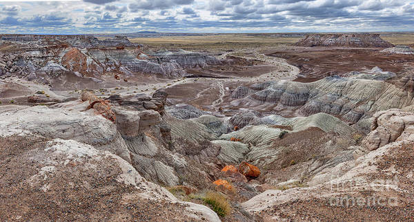 Stormcloud Photograph - Stormy Morning At Petrified Forest  by Sandra Bronstein