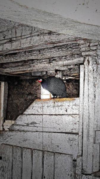 Photograph - Strange Birdie by Cyryn Fyrcyd