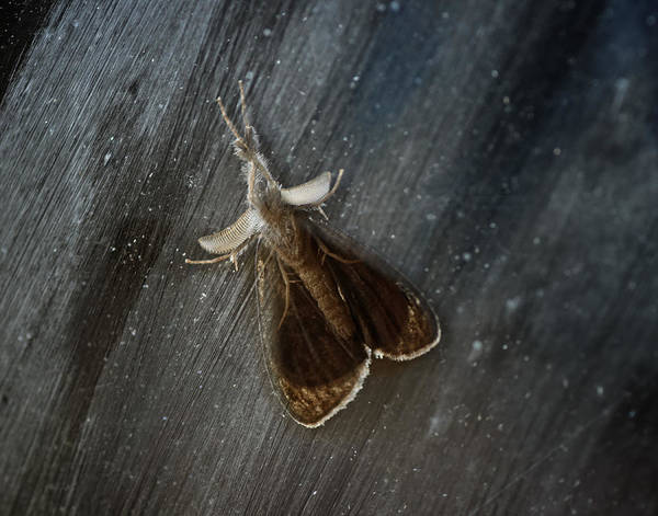 Moth Photograph - Stranger At My Window by Susan Capuano