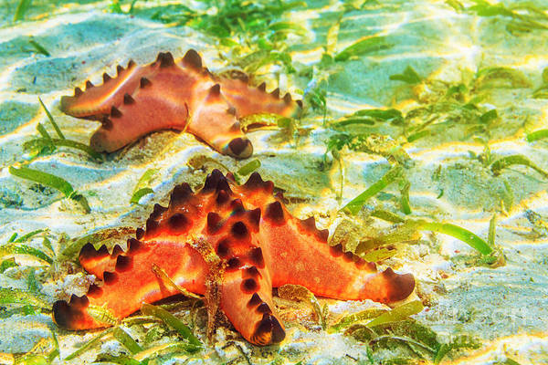 Wall Art - Photograph - Strarfishes by MotHaiBaPhoto Prints