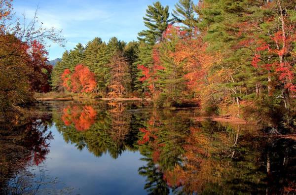 Photograph - Stream In Autumn by Larry Landolfi