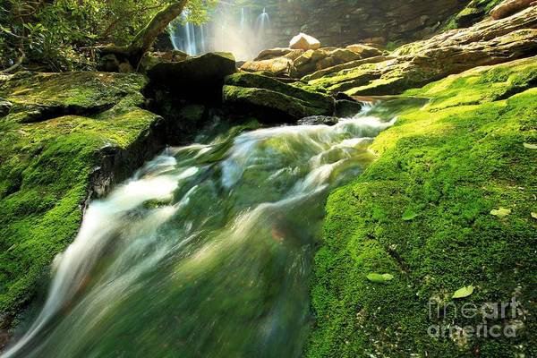 Photograph - Stream Through The Moss by Adam Jewell