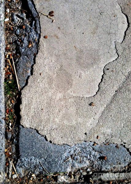 Photograph - Streets Of Coronado Island 24 by Marlene Burns