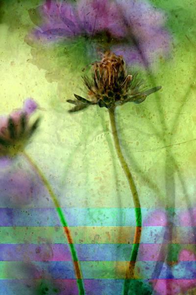 Chartreuse Photograph - Striped Celebration by Bonnie Bruno