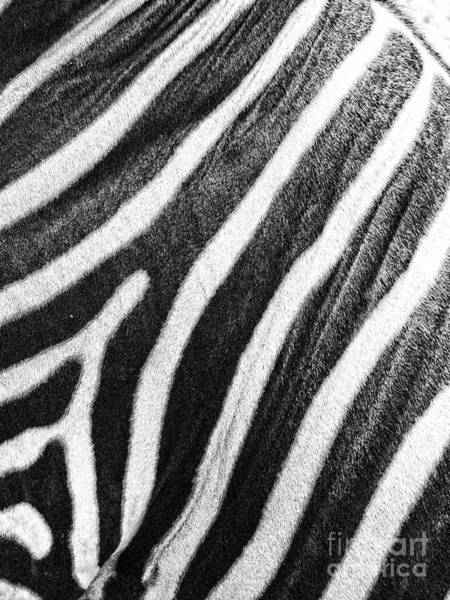 Photograph - Stripes by Traci Cottingham
