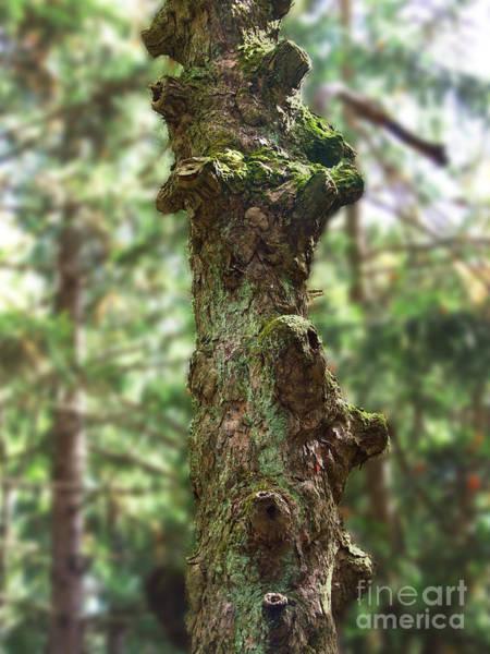 Photograph - Stumpy Photograph by Kristen Fox
