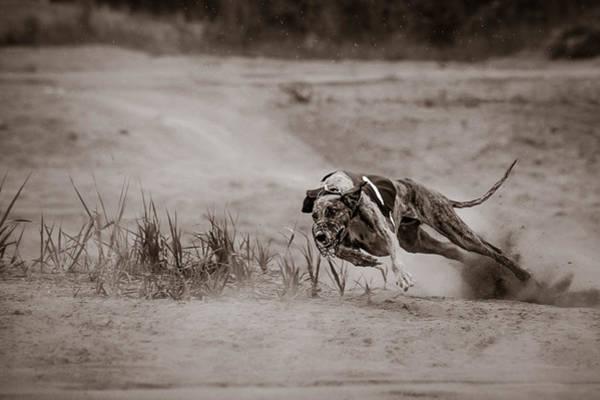 Photograph - Sturdy And Powerful by Ari Salmela