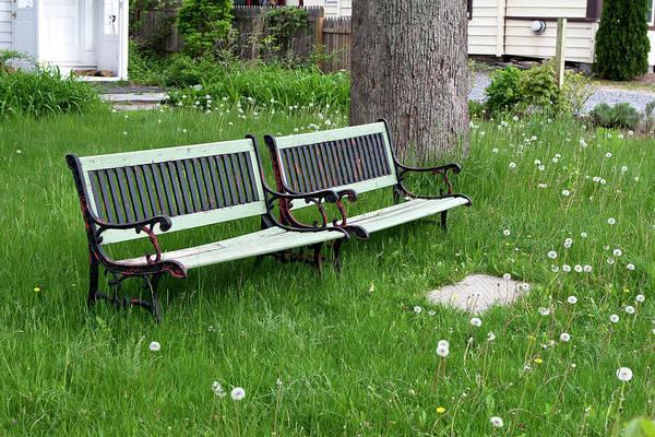 Photograph - Summer Bench And Dandelions by Lorraine Devon Wilke