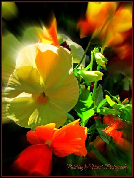 Photograph - Summer Bloom by Deahn      Benware