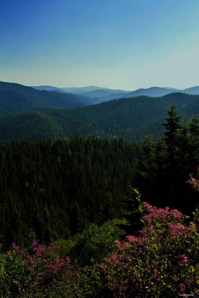 Photograph - Summer In The Mountains by Joseph Noonan
