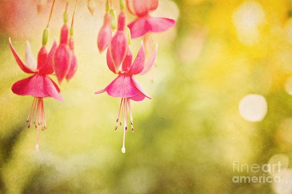 Photograph - Summer Lov'n by Beve Brown-Clark Photography