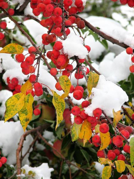 Photograph - Summer Meets Winter by Rick Wicker