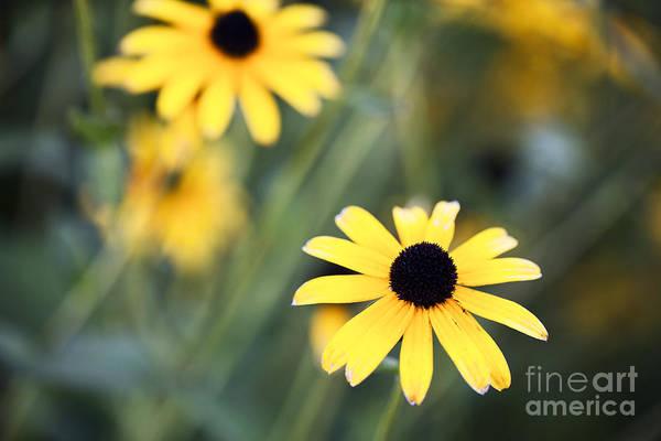 Photograph - Summer Memories  by Leslie Leda