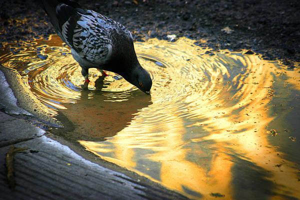 Photograph - Sun Drops by Emanuel Tanjala