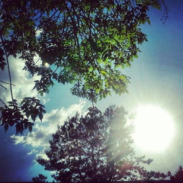 Wall Art - Photograph - #sun #trees #clouds #sunny .. I #love by Gina Marie
