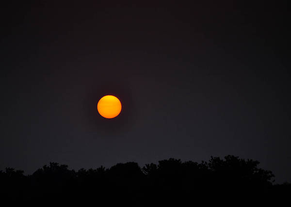 Photograph - Sun by Trish Tritz