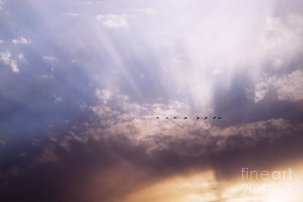 Photograph - Sunbeams And Geese by Larry Ricker