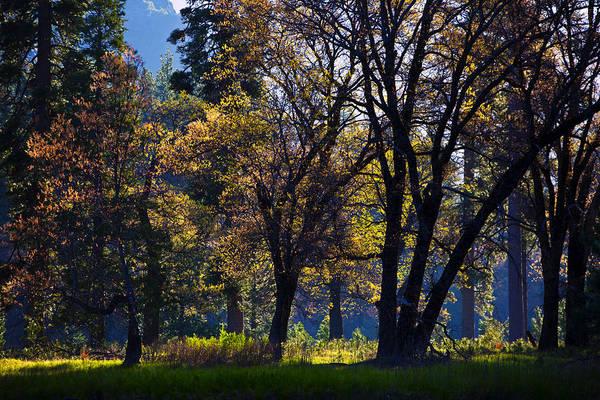 Photograph - Suncatchers by Rick Berk