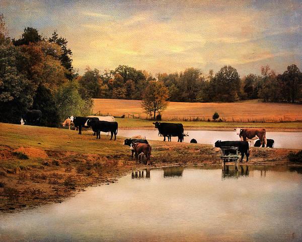 Photograph - Sunday At The Pond by Jai Johnson