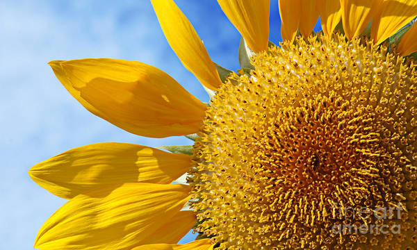 Photograph - Sunflower Cheer by Andee Design