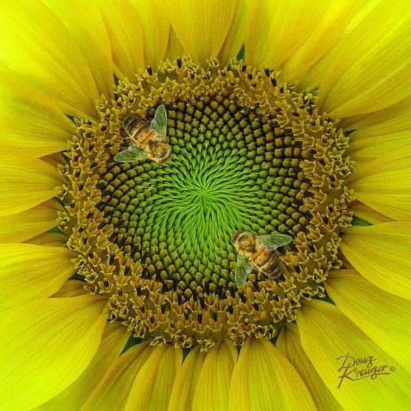 Bee On Flower Wall Art - Painting - Sunflower Dance II by Doug Kreuger