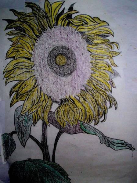 Sunflower Seeds Drawing - Sunflower by De Beall